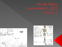 Anatomy Powerpoint