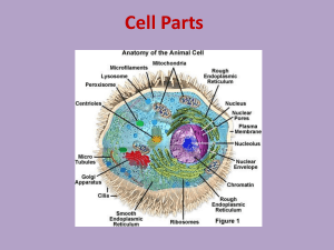 A cell is like a human body because the both contain things that are