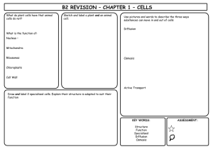 B2_Revision_Sheets.ppt - New College Leicester