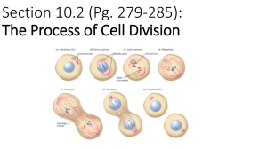Section 10.2 (Pg. 279-285): The Process of Cell Division