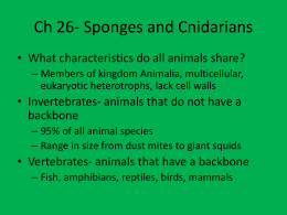 Ch 26- Sponges and Cnidarians