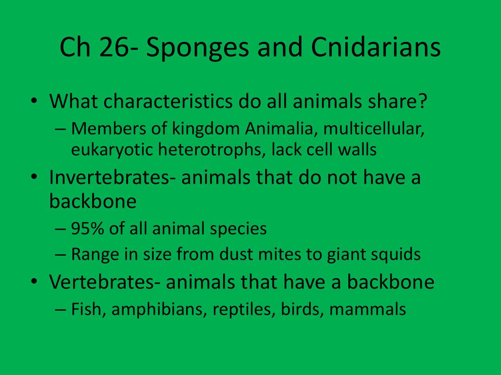 Ch 26 Sponges And Cnidarians [ 768 x 1024 Pixel ]