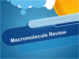 Macromolecule Review - Mr. Dudley`s Website