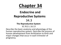 34.3 The Reproductive System - Biology EOC Review Resources