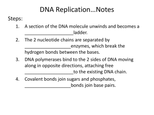 Guided Notes DNA Replication, Transcription, and Translation