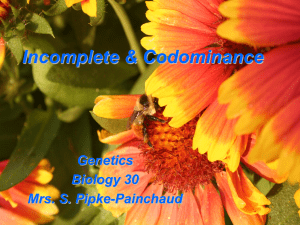 Incomplete & Codominance Powerpoint