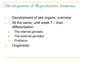 Development of Reproductive Anatomy