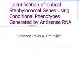 Identification of Critical Staphylococcal Genes Using Conditional