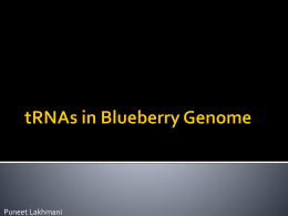 Media:tRNAs - Genomics and Bioinformatics @ Davidson