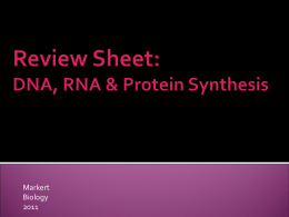 Review Sheet : DNA, RNA & Protein Synthesis