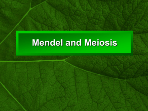 Mendel and Meiosis