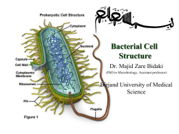 bacteria of the respiratory tract lab report Gastrointestinal infections - gastrointestinal infections are among the most commonly encountered infections in primary care while they may not always be severe and may often resolve rapidly, they can be serious in specific healthcare settings or patient populations.