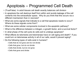 Apoptosis – Programmed Cell Death