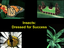Insect Adaptations Power Point