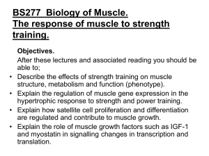 BS277 Biology of Muscle. The response of muscle to strength
