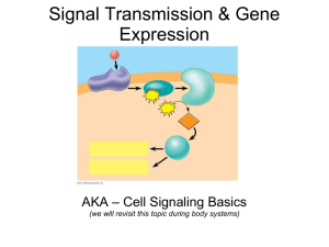 Cell Signaling Basics