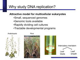 Why Study DNA Replication