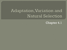 Adaptation,mutation and natural selection