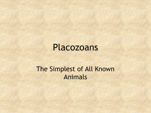 Placozoans and Mesozoans