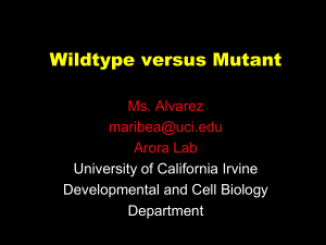 Mutant vs wildtype - University of California, Irvine