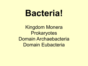 Bacteria! Kingdom Monera Prokaryotes Domain
