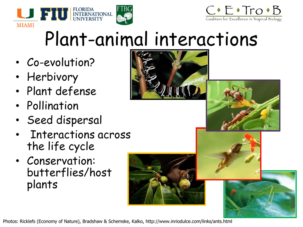 Species interactions biol ppt video online download.