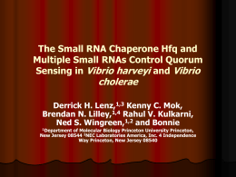 The Small RNA Chaperone Hfq and Multiple Small RNAs Control