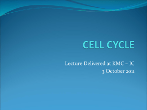 cellcycle - WordPress.com