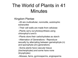 The World of Plants in 41 Minutes