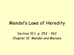 Mendel`s Laws of Heredity