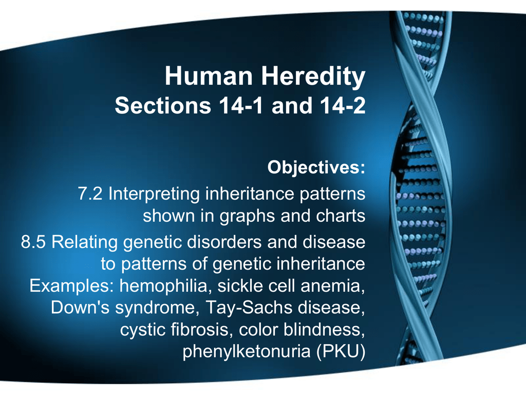 worksheet Section 14 2 Human Chromosomes Worksheet Answers human heredity section 14 1