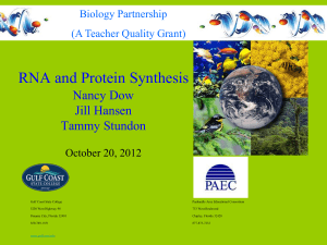 RNA Protein Synthesis - Panhandle Area Educational Consortium