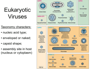 Eukaryotic Viruses