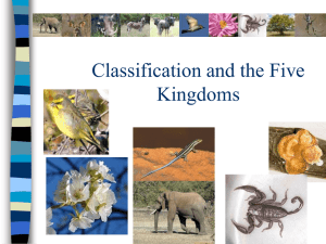 Classification and the Six Kingdoms