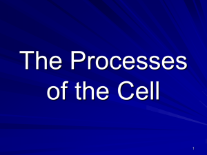 The Processes of the Cell - Troup 6