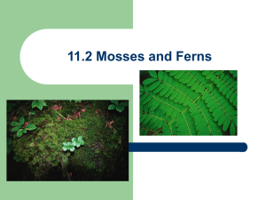 11.2 Mosses and Ferns