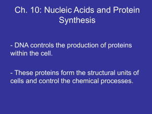 Ch. 10: Nucleic Acids and Protein Synthesis