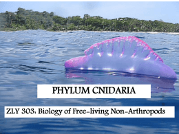 ZLY 303 Lecture Slides on Cnidaria