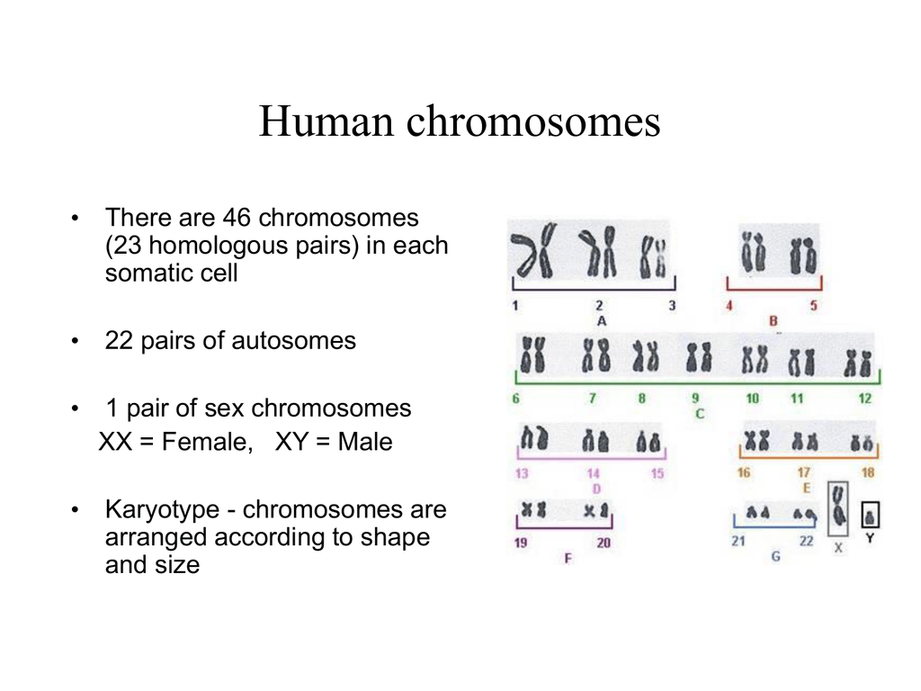 problem solving critical thinking chromosomal nondisjunction disorders