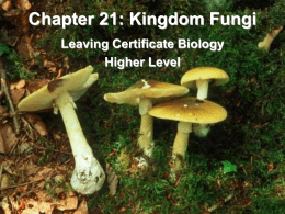 Fungi - Leaving Cert Biology