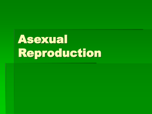 4 Asexual Reproduction