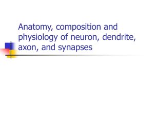 Anatomy, composition and physiology of neuron, dendrite, axon,and