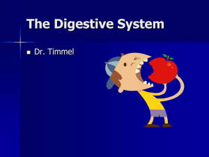 The Digestive System - Valhalla High School