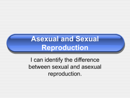 Asexual and Sexual Reproduction & Animal Development