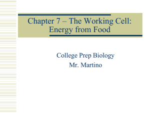Cell Respiration PPT