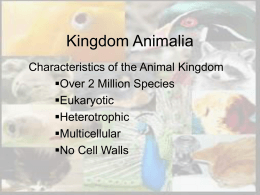 Kingdom Animalia PowerPoint