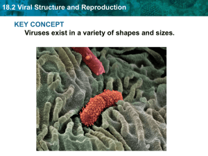 18.2 Viral Structure and Reproduction
