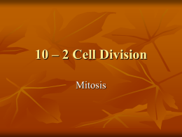 10 – 2 Cell Division