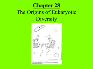 Chapter 28 The Origins of Eukaryotic Diversity