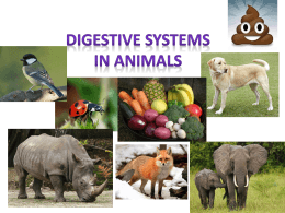 Digestive Systems in Animals